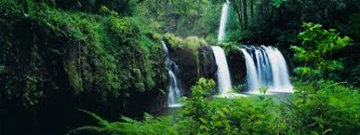 Rain Forest Panorama by Peter Lik