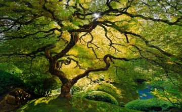 Inner Peace (Oregon)  Panorama - Peter Lik