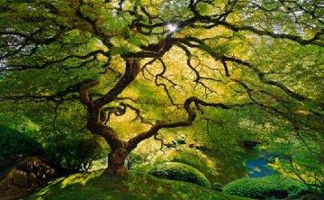 Inner Peace (Oregon)  Panorama by Peter Lik