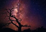 Tree of the Universe (Mauna Kea, The Big Island, Hawaii) Panorama by Peter Lik - 0
