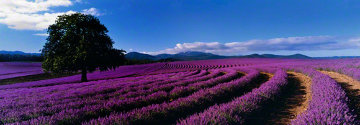 Lavender Sea (Tasmania, Australia) Panorama by Peter Lik
