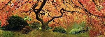 Tree of Zen  Panorama - Peter Lik