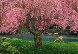 Tree of Dreams (Washington State) Panorama by Peter Lik - 0