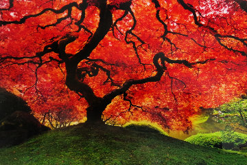 Tree of Life (Oregon) 1.5M Huge Panorama - Peter Lik