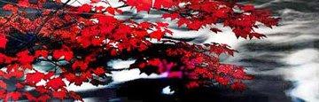 River of Zen   AP (Telluride, Co) Panorama by Peter Lik