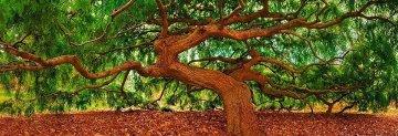 Spirit of Wisdom  Panorama by Peter Lik