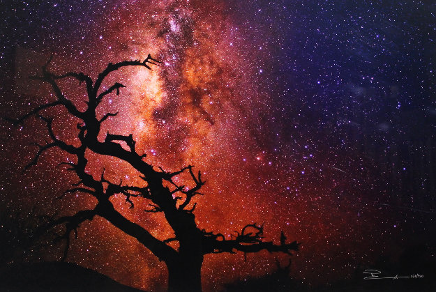 Tree of the Universe (Mauna Kea, The Big Island, Hawaii)  Panorama by Peter Lik