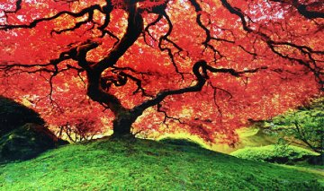 Tree of Life (Oregon) Panorama by Peter Lik
