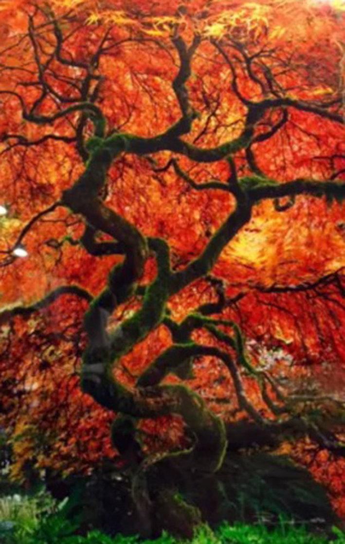 Infinity Tree Panorama by Peter Lik