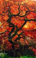 Infinity Tree Panorama by Peter Lik - 0