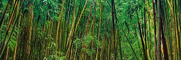 Prosperity (Maui, Hawaii)  Panorama - Peter Lik