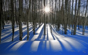 Sunlit Birches (Telluride, Colorado) 1.5M  Panorama - Peter Lik
