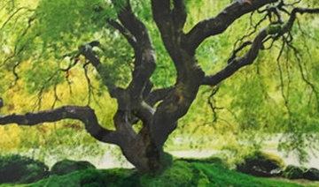 Tree of Serenity AP 108 in Panorama by Peter Lik