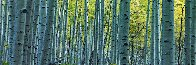 Endless Birches Colorado 1.5M Huge Panorama by Peter Lik - 0