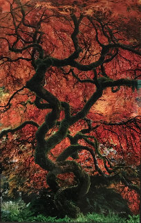 Infinity Tree Panorama by Peter Lik
