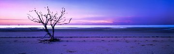 Solitude  (Cape York, Queensland) Panorama by Peter Lik
