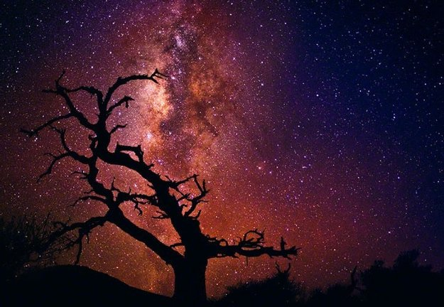 Tree of Universe (Mauna Kea, The Big Island. Hawaii) Panorama by Peter Lik