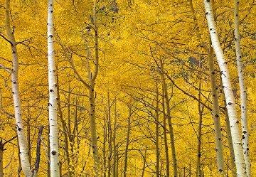 Yellow  Panorama - Peter Lik