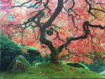 Wisdom 2012 Panorama by Rodney Lough, Jr.