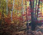 Big Birch Forest Panorama - Rodney Lough, Jr.