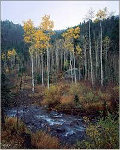 Aspen Creek Panorama - Rodney Lough, Jr.