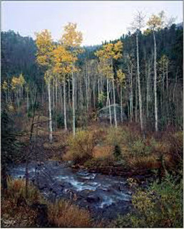 Aspen Creek Panorama by Rodney Lough, Jr.