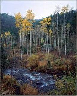 Aspen Creek Panorama by Rodney Lough, Jr.