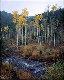 Aspen Creek Panorama - Rodney Lough, Jr.