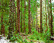 Ancient Forest Panorama by Rodney Lough, Jr.  - 0