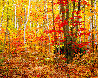 Big Birch Forest     Panorama by Rodney Lough, Jr.  - 0