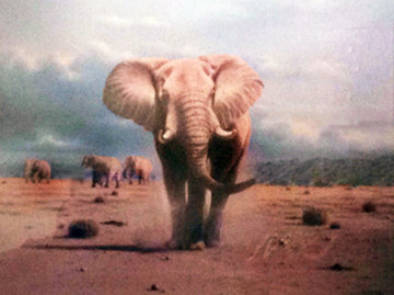 Elephant Territory 1988 Limited Edition Print by Rob MacIntosh