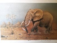 Score to Settle, Disturbed Jumbo, Reclining Cheetahs 1984, Set of 3 Prints Limited Edition Print by Rob MacIntosh - 2