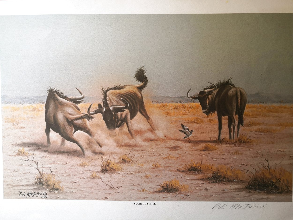 Score to Settle, Disturbed Jumbo, Reclining Cheetahs 1984, Set of 3 Prints Limited Edition Print by Rob MacIntosh