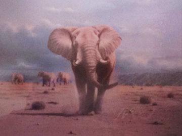 Elephant Territory 1988 30x35 Limited Edition Print by Rob MacIntosh