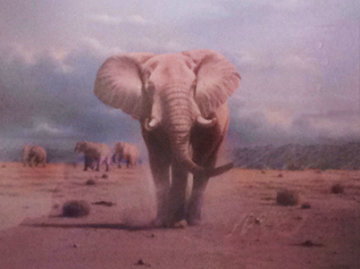Elephant Territory 1988 30x35 Limited Edition Print by Rob MacIntosh