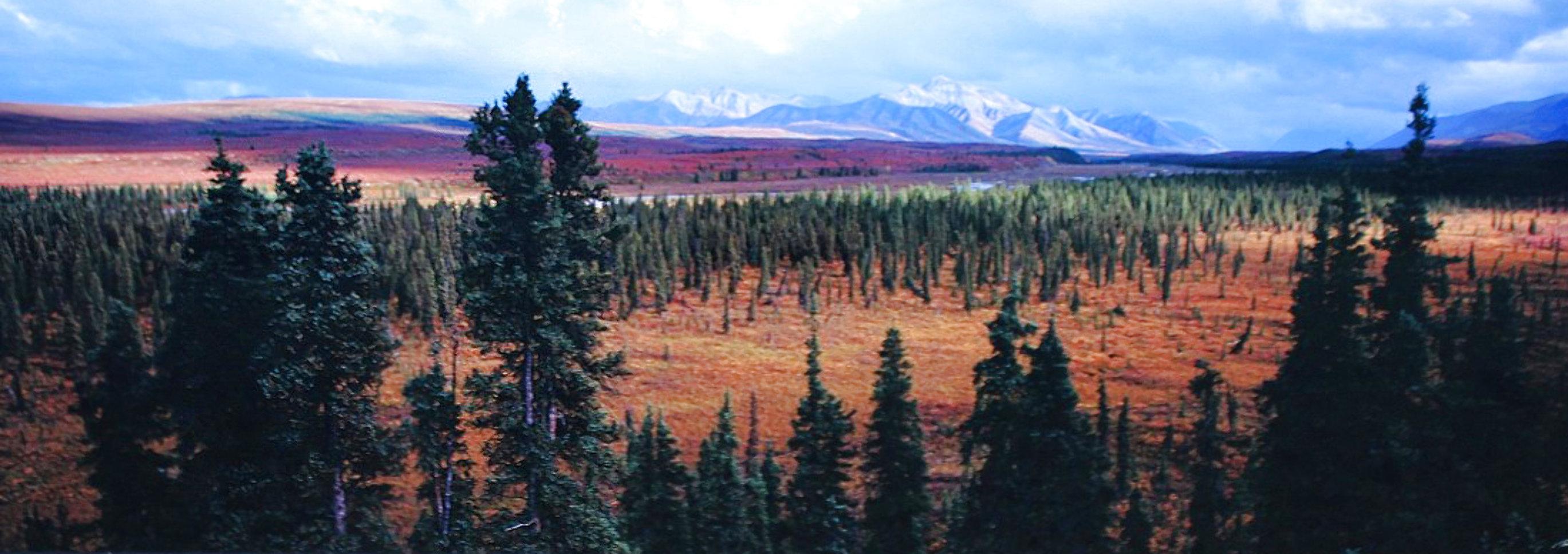 Season Passing (Denali)  AP 1.5M Super  Huge Panorama by Thomas Mangelsen