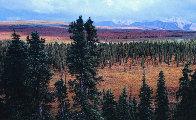 Season Passing (Denali)  AP 1.5M Super  Huge Panorama by Thomas Mangelsen - 5