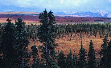 Season Passing AP  (Jackson Wyoming) Huge  Panorama - Thomas Mangelsen