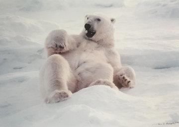 Feels Good - Polar Bear  Panorama by Thomas Mangelsen