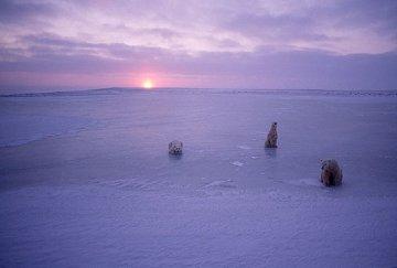 Arctic Nights  Panorama by Thomas Mangelsen