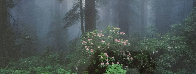 Serenity - Rhododendrons and Redwoods AP Panorama by Thomas Mangelsen - 1