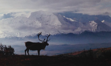 Caribou Country Panorama by Thomas Mangelsen
