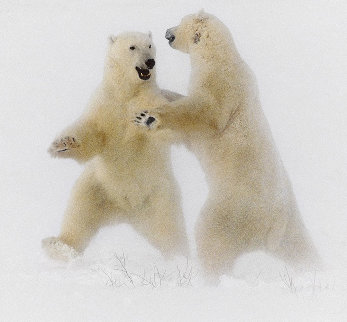 Polar Dance  Panorama by Thomas Mangelsen
