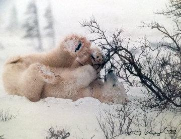 Polar Fun Panorama by Thomas Mangelsen