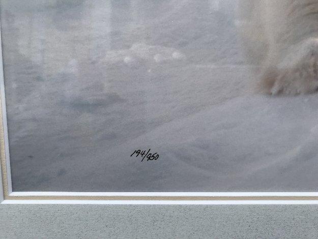 Feels Good Polar Bear Panorama by Thomas Mangelsen
