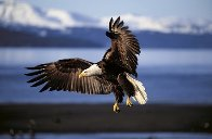 Into the Wind Panorama by Thomas Mangelsen - 0