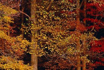 Colors of the Smokies Panorama - Thomas Mangelsen