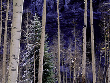White River Aspens Panorama - Thomas Mangelsen