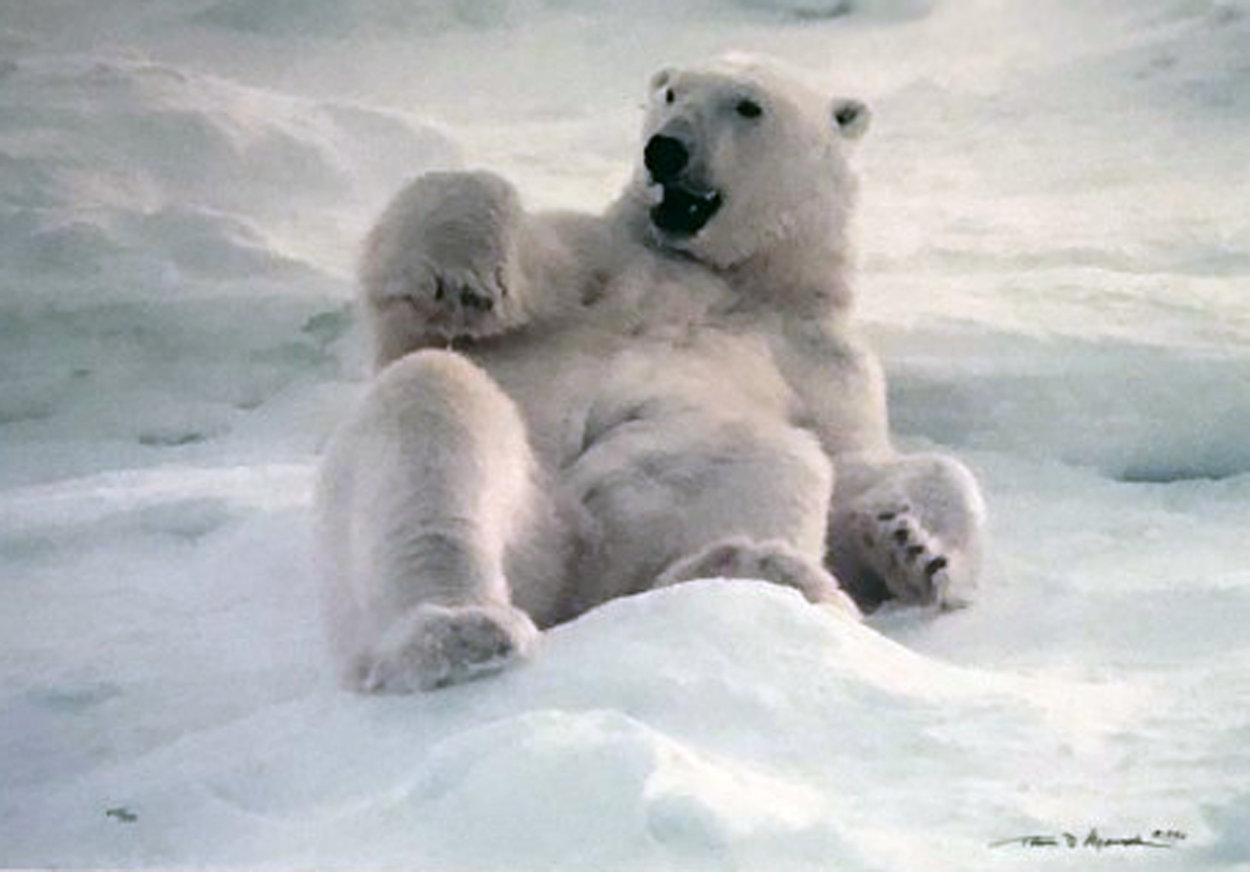 Feels Good - Polar Bear 1990 Panorama by Thomas Mangelsen