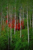 Colors of the Wasatch Panorama by Thomas Mangelsen - 0